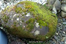 Materials - Moss