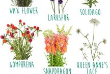 Cut flower garden / Garden ideas