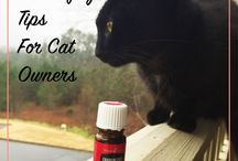 Cats and oil