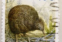 I Need More Kiwis in My Life / Love of all things Kiwi!