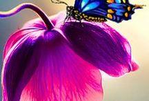 Pillangók