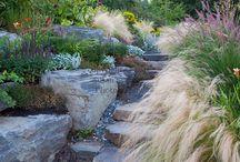 Front hillside / Front yard