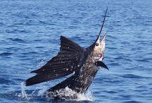 gone fishing costa rica / fishing in costa rica