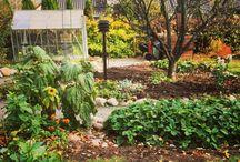 Our garden in October 2016