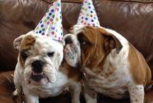 Birthday Pet