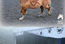 Heste