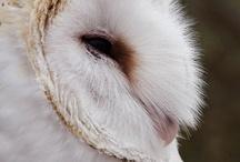 Owls, Owls, Owls.......