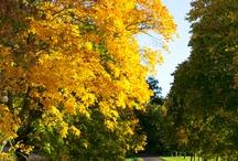 Autumn / Höst / by Hildas