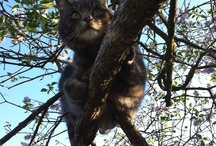 Mons - The Cat / Our playful, intelligent and corny male cat MONS.