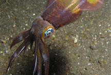 Marine Animals / sea creatures