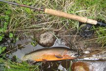 CUTTHROAT TROUT (UNCERTAIN OF THE SUB-SPECIES) / Fly fishing for cutthroat trout.  Cutthroat trout on the fly.  I am uncertain of the sub-species from the photo.