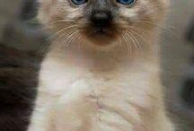 Γατακια