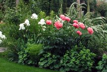Garden - Cut Flower Garden