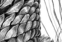 Patterns in nature- focus- spirals