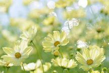 Plants, Herbal