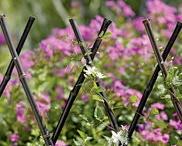 Garden Ideas + Tips