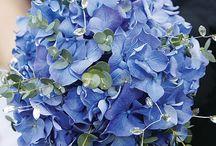 Flower prices