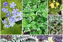 Popular Pins | Hearth and Vine / Best of Hearth and Vine including crafts, recipes and gardening tips.