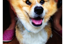 Mukku / 家宝犬