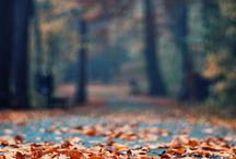 autumn / a little bit of inspirations