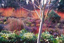 Y_winter beauty / plants interesting in winter
