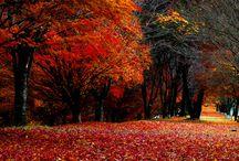 Forêts et sentiers