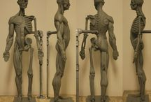 Anatomy & Character Design REFERENCES