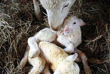New born animals