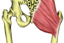 Back, Hip, Psoas  / Back Health