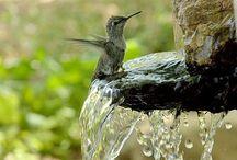 Birds Etc. / by Kathy Bernsen