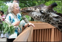 Betty White's Animal Friends / by The Lifeline Program