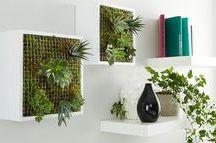 φυτα-κατασκευες