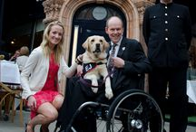 Charity / Each year Wagging Tails raises funds and awareness for a different dog related charity. In 2012 this was Guide Dogs and in 2013 we are supporting @HoundsforHeroes