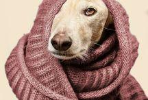 las muy perras ☆ / http://www.lasmuyperras.com/