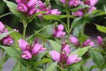 Mijn roze bloementuin