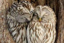 sevimli baykuşlar