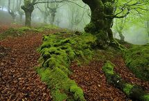 Beautiful Basque Country / by Chaim Dnnwld