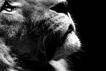 The Animals  / by Jillian Zepeda