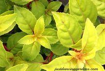 Fantastic Foliage / Amazing shapes, colors, textures...