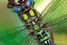 Dragonflies / by Penny McGahen