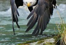Birds Of Prey / by Gabriele Taxis