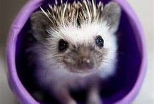 hedgehogs<3