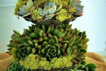Three tier / Succulents
