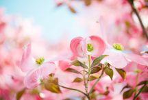 Bloemenpracht / Inspiratie
