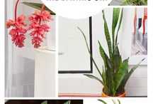 plants that grow in the bathroom
