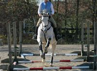 HORSES: Training / Pins about training horses / by Emily Nolan