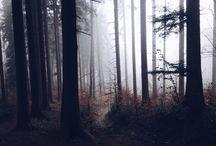 WILDERNESS | V divočině / Into the wild.