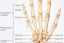 인체(손&발)