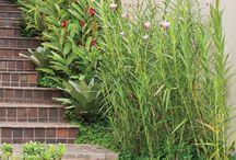 Jardim / Inspirações para quem quer ter um jardim em casa, seja no quintal, na varanda, ou onde mais você achar que cabe uma plantinha por ai.