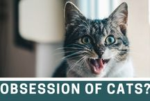 Why Is The Social Media Obsessed With Cats? / 0